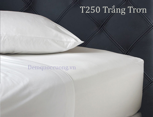 T250 Trắng Trơn